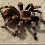 Meio ambiente - Você sabe qual é a melhor forma de matar uma aranha?