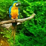 Meio ambiente - Projeto Preservação das Araras!!