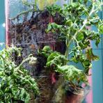 Meio ambiente - Jardinagem e cultivo de plantas no espaço | Paisagismo Digital