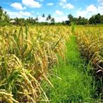 Meio ambiente - Para alimentar mais 4 bilhões de pessoas, devemos abolir carne, leite e ovos, diz estudo
