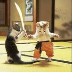 Violência - Por pouco brigas de gatos não se transformam em tragédia em Salobro...