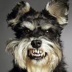 Educação - Você sabia que os cães e gatos imitam seus donos.