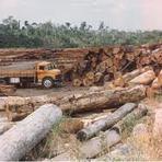 Meio ambiente - O meio ambiente agredido