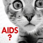 Animais - Você conhece a AIDS felina?