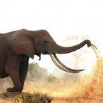 Animais -  Elefante brinca com terra no Quênia