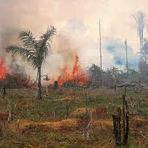 Meio ambiente - Crescimento destrutivo