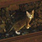 Animais - Gatinhos fugitivos param o metrô de Nova York