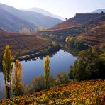 Portugal - Celebrar a colheita da uva, Alto Douro, Portugal