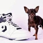 Animais - Cadela do tamanho de um tênis bate recorde como o menor cão do mundo