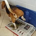 Animais - Ensinando a fazer xixi e cocô no jornal