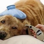 Animais - Diabetes em cães