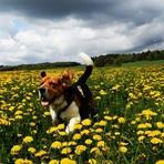 Animais - Cães têm emoções como os humanos, afirma uma nova pesquisa