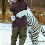Animais - APRENDENDO A VIVER - Creio que eu poderia transformar-me e viver como os animais.