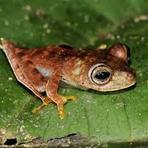 Meio ambiente - Expedição científica descobre 60 novas espécies de animais no Suriname