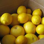 Diversos - Cultivando limão