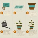 Diversos - Plantando manjericão