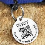 Animais - Tecnologia pet: QR Code é a novidade para a identificação de cães