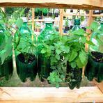 Meio ambiente - Aprenda a fazer uma horta suspensa dentro de casa com garrafas pet