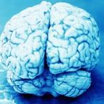 Ciência - 15 Fatos bizarros sobre o cérebro
