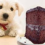 Animais - Chocolate pode ser mortal para os cães! Saiba porque...