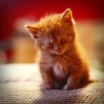 Animais - Gatinhos fofos