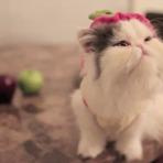Animais - Mitos e Verdades, a respeito dos Gatos