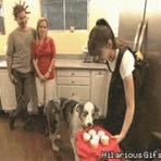Memes - Cupcake Dog