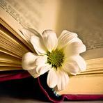 Poesias - Nariz que não cheira e nós que não afrouxam