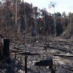 Meio ambiente - Municípios em áreas de desmatamento sofrem mais com a violência, diz Ipea