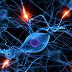 Tecnologia & Ciência - Supercomputador modela 1 segundo de atividade cerebral