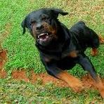 Eleições 2012 - Ninguém chuta cachorro morto