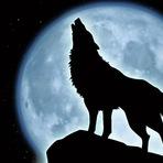 Animais - Como os lobos mudaram o comportamento dos rios!