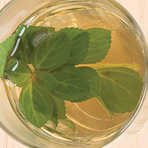 Chá de boldo para combater resfriados