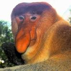Animais - 7 dos animais feios do mundo