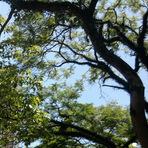 Fotografando - árvores
