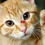 Entretenimento - Gatos Malucos e engraçados