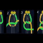 Arte & Cultura - Minha apresentação de slides : macramê nó chato duplo, em 04 etapas! ...