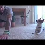 Animais - É hora da aula de yoga