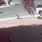 Animais - Gatinha Salva Criança de Ser Atacada Por Cachorro