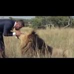 Animais - Decidiu jogar futebol com leões selvagens e o resultado final...
