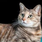 Animais - O gato mais velho do mundo completa 24 anos