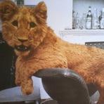 Livros - Um Leão Chamado Christian, de Ace Bourke e John Rendall