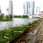 Utilidade Pública - Parque reciclado flutuante limpa lixo plástico do rio, nos Países Baixos