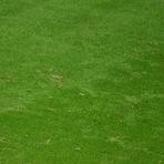 Copa do Mundo - Holanda bate zebra Costa Rica nos pênaltis e vai às semifinais da Copa