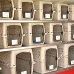 """Utilidade Pública - """"companhia aérea para transportar animais de estimação""""...humanos não serão permitidos""""..."""" Donos poderão monitorar seus"""