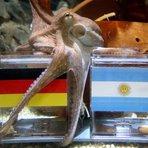 Copa do Mundo - Polvo Paul 'diz' que Alemanha vai ganhar a final da Copa do Mundo